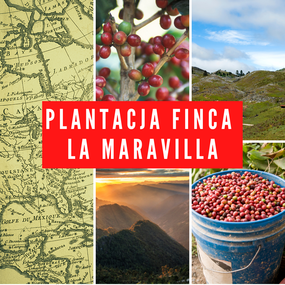 Plantacja Finca La Maravilla