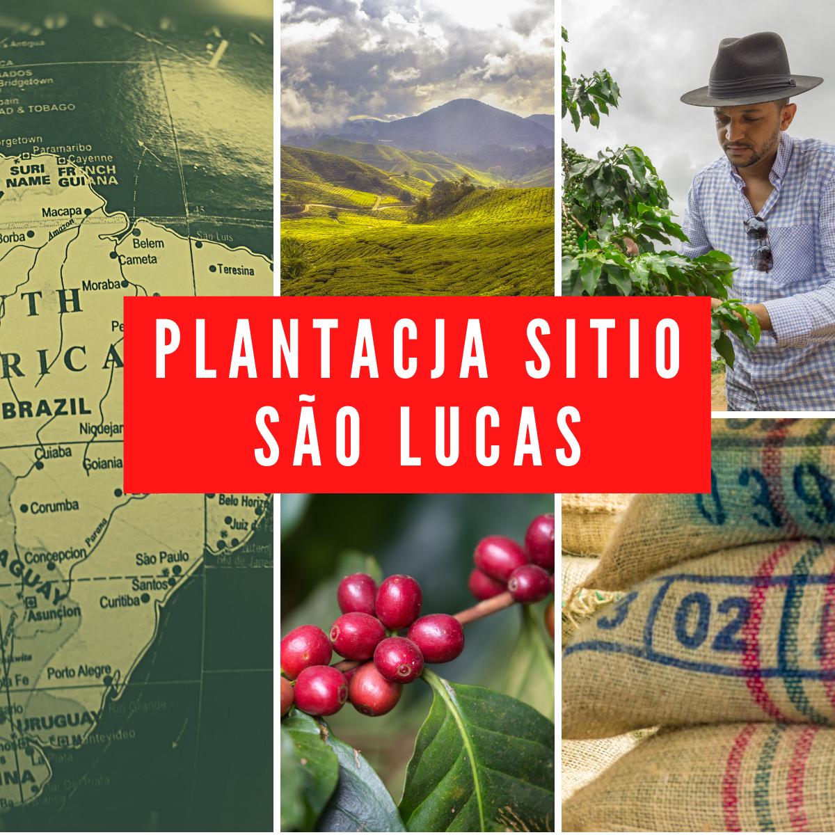 Plantacja Sitio Sao Lucas